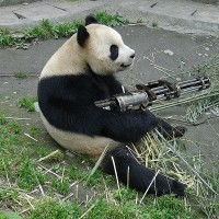 灰色の熊猫