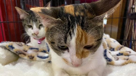 猫用高級おやつプラン