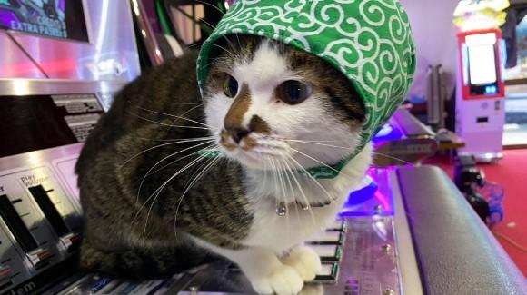 お徳用猫缶プラン